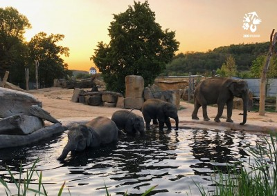 Pohlednice Zoo Praha – západ slunce v Údolí slonů