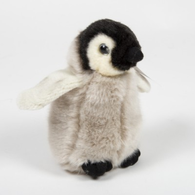 Mládě tučňáka císařského