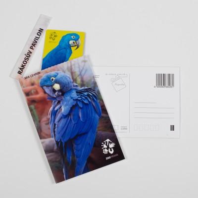 Dárková pohlednice Zoo Praha – ara Learův