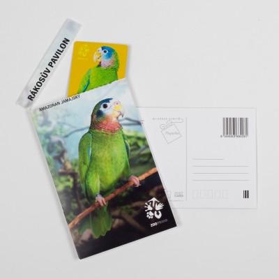 Dárková pohlednice Zoo Praha – amazoňan jamajský