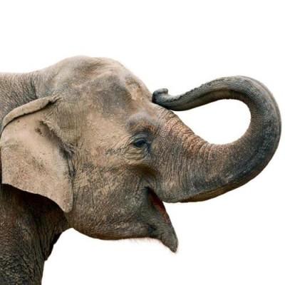 Chovatelem na jeden den v Údolí slonů