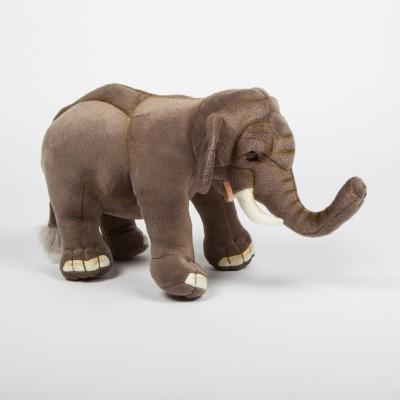 Slon velký