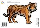 Samolepka – Tygr malajský