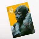 Magnetka s motivem gorilího mláděte