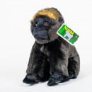 Gorila nížinná ze Zoo Praha - Kamba