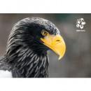 Pohlednice Zoo Praha - orel východní