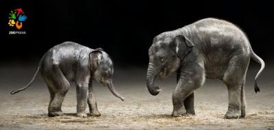 Pohlednice – Dva sloní kamarádi