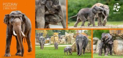 Pohlednice Zoo Praha  –  Sloni v Zoo Praha