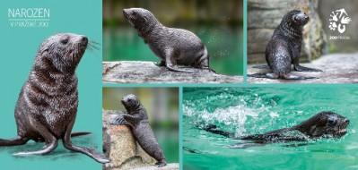 Pohlednice Zoo Praha  – Narozeni v pražské zoo
