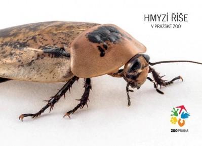 Hmyzí říše – šváb velkokřídlý
