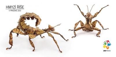 Hmyzí říše – strašilka australská