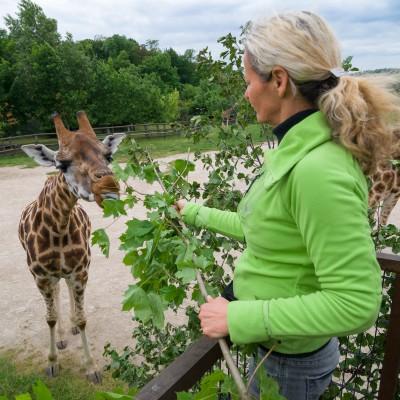 Návštěva u žiraf