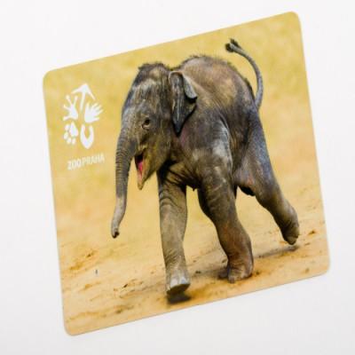 Magnetka s motivem sloního mláděte