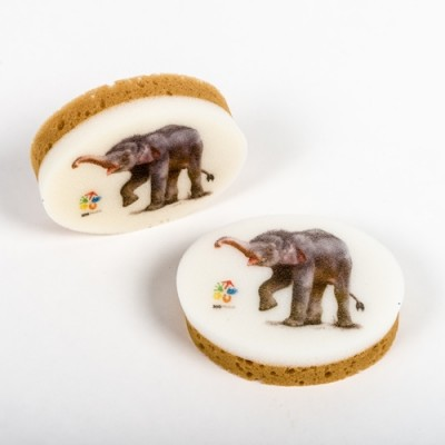 Houbička Zoo Praha - slon