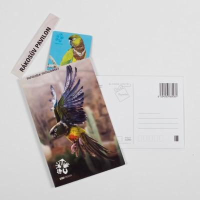 Dárková pohlednice Zoo Praha – papoušek patagonský