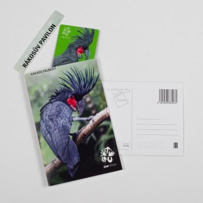 Dárková pohlednice Zoo Praha – kakadu palmový