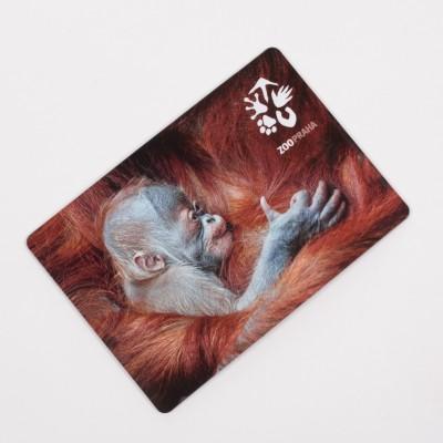 Magnetka s motivem mláděte orangutana