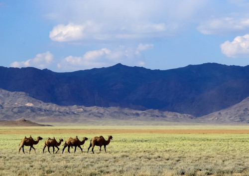 Fotoobraz - Velbloudi v poušti na cestě z Bulgan sumu do Tachin talu