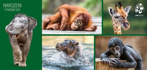 Pohlednice Zoo Praha  –  Mláďata v Zoo Praha