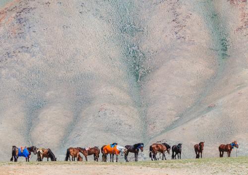 Fotoobraz - Závodní koně během nádamu