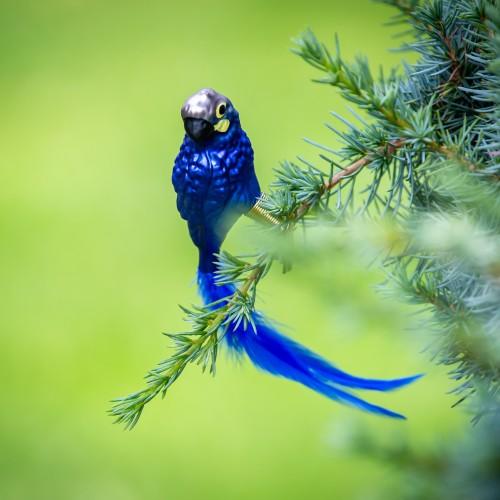 Ručně malovaná vánoční ozdoba s motivem papouška – ara Learův