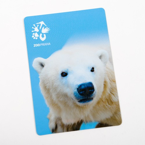 Magnetka s motivem medvěda ledního