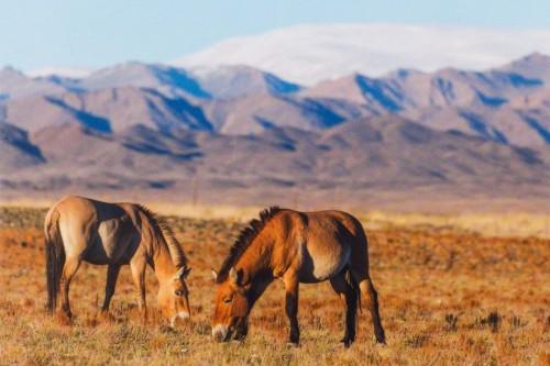Leporelo Návrat divokých koní