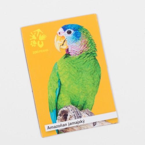 Magnetka s motivem papouška – amazoňan jamajský