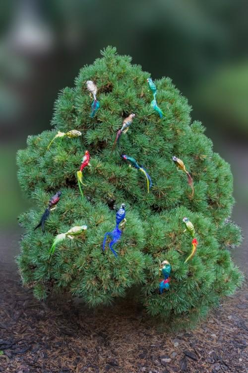 Ručně malovaná vánoční ozdoba s motivem papouška – lori mnohobarvý