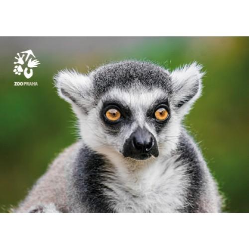 Pohlednice Zoo Praha - lemur kata